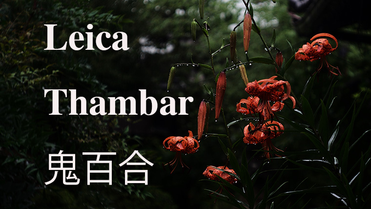 leica thambar 鬼百合